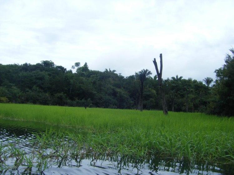 Amazonie wp-20
