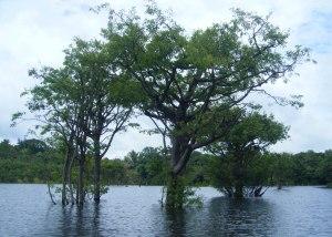 Amazonie wp-23
