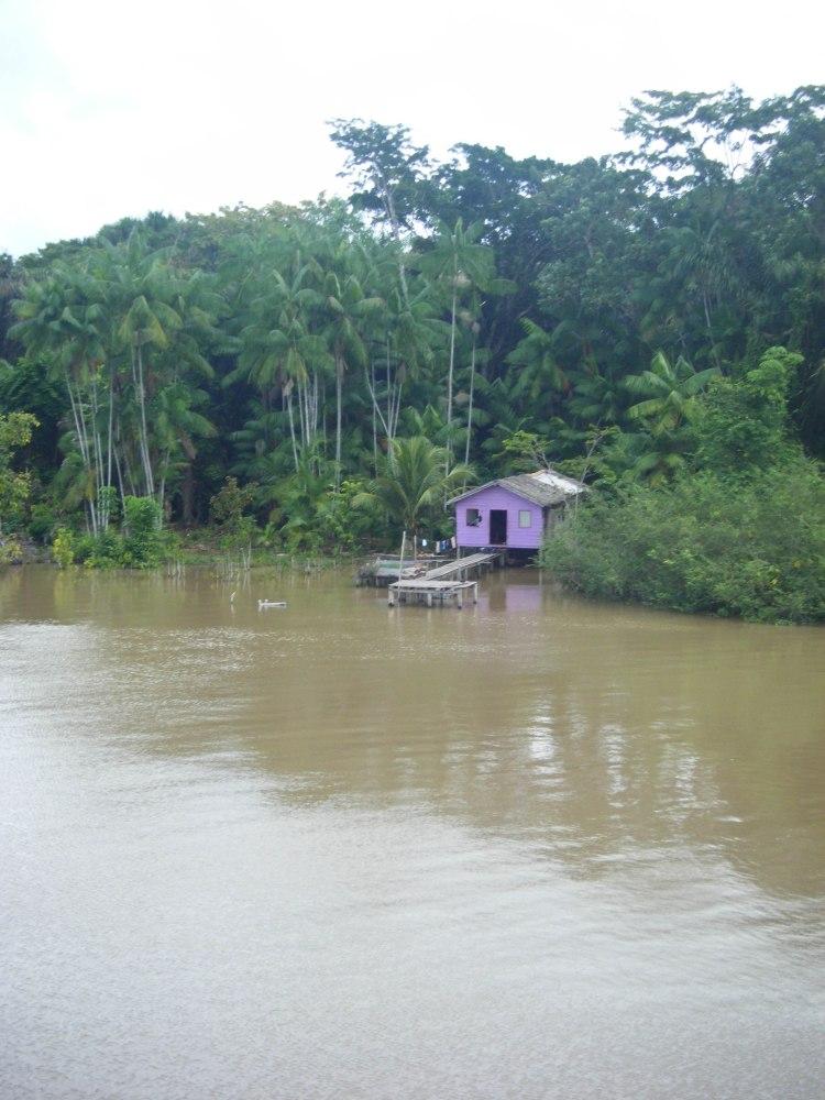 Amazonie wp-3