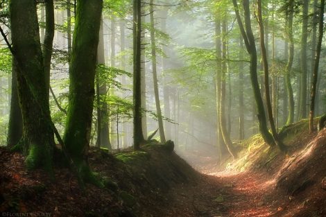 pathway_to_a_mystic_world_by_lavaspawn-d4cp2hw