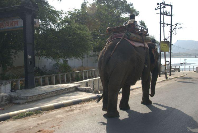 India 29 - Hendi Kaf